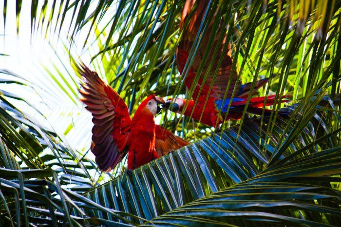 Costa Rica | Pura Vida!